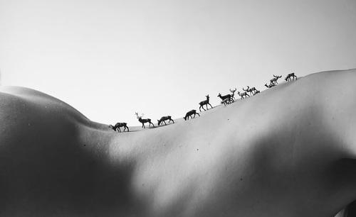Bande de cerfs