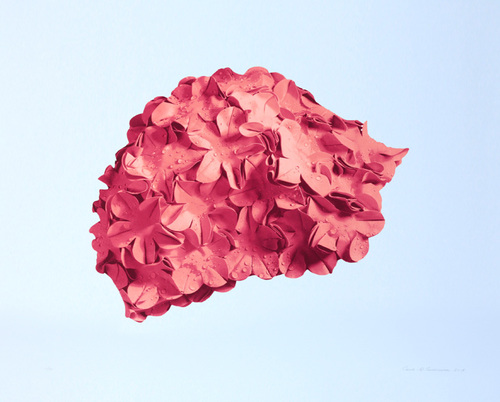 Pink cap on blue background, 2015